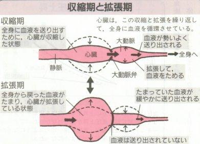 期 血圧 拡張